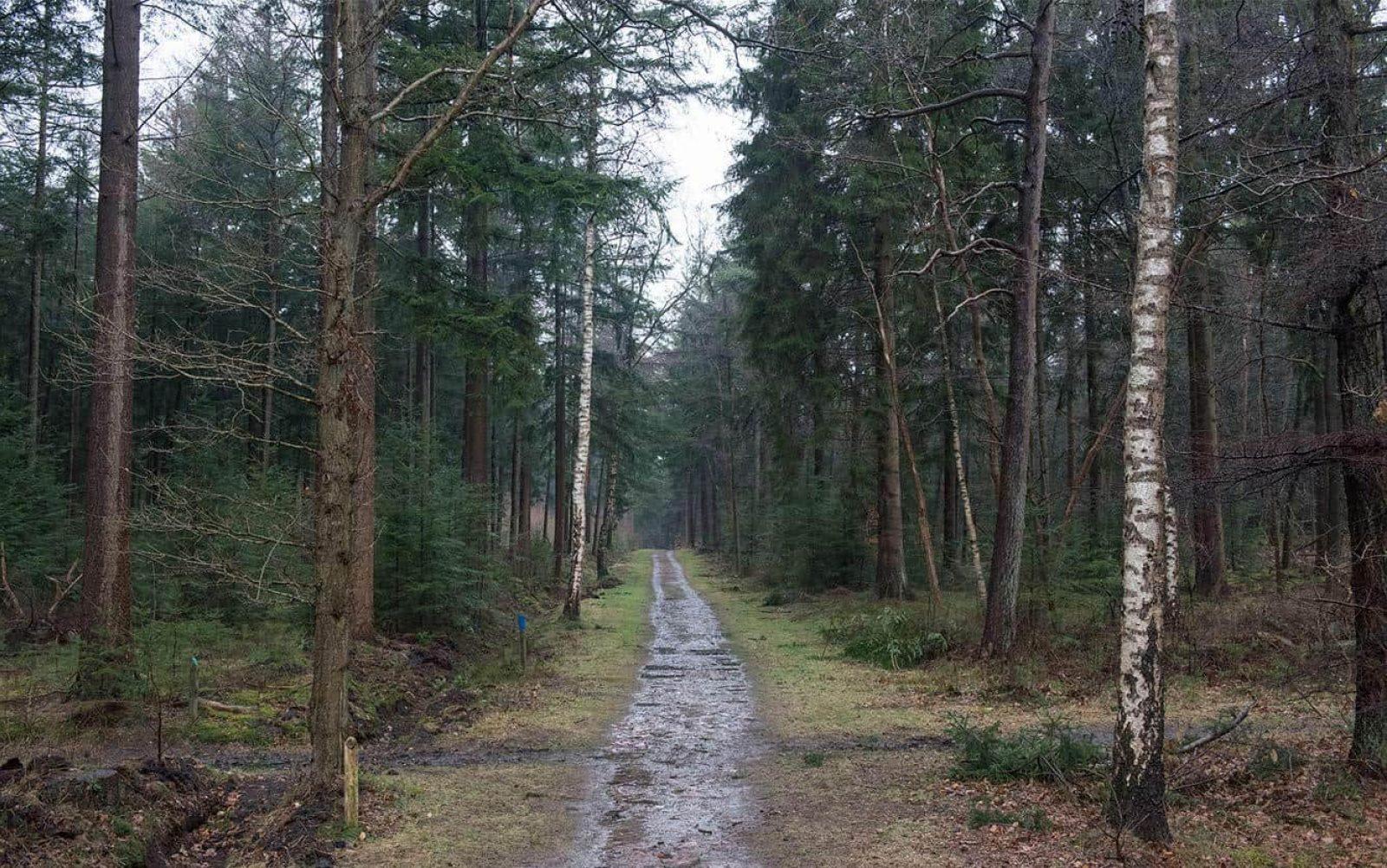 Landschap 2