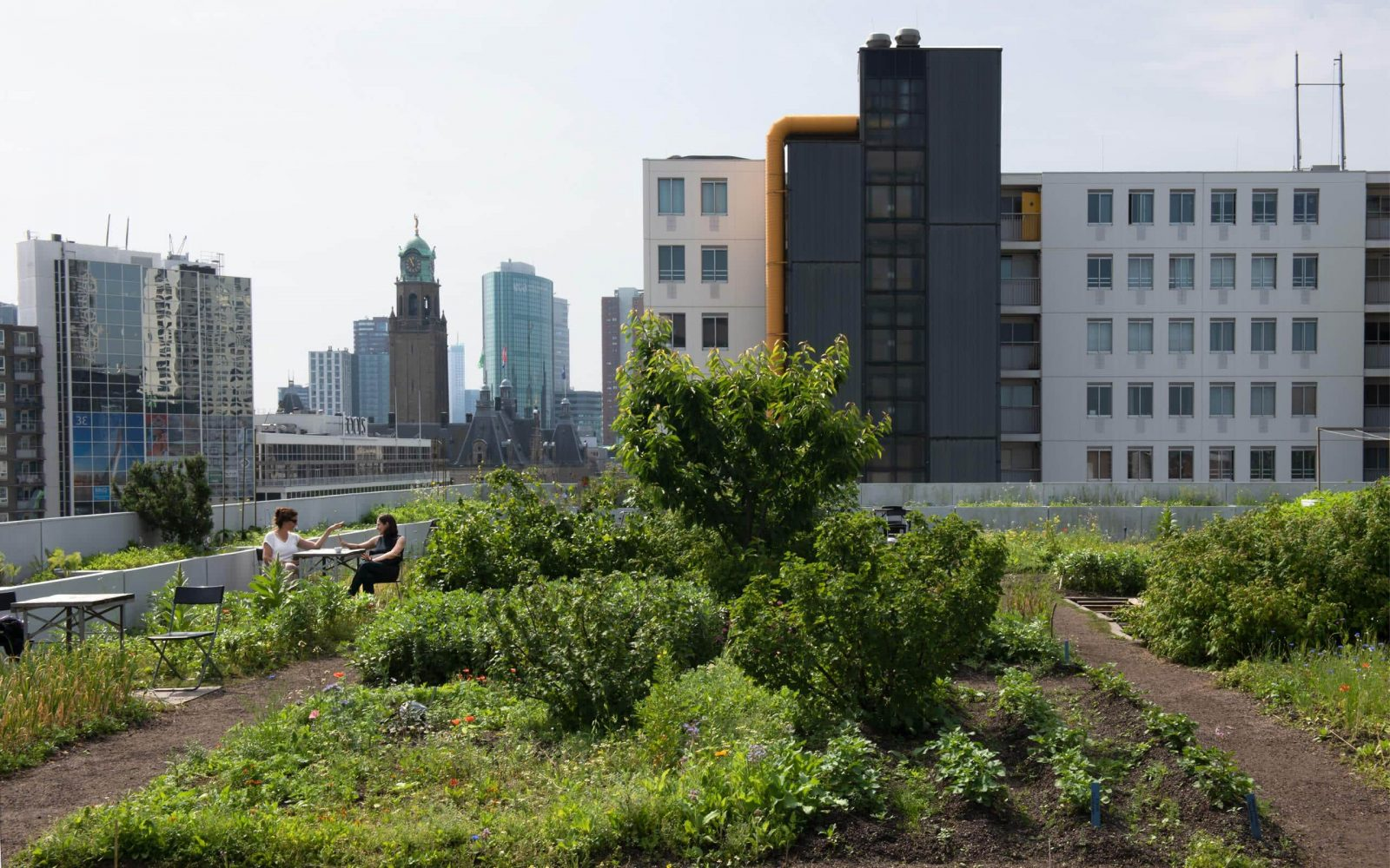 Stadslandbouw 1