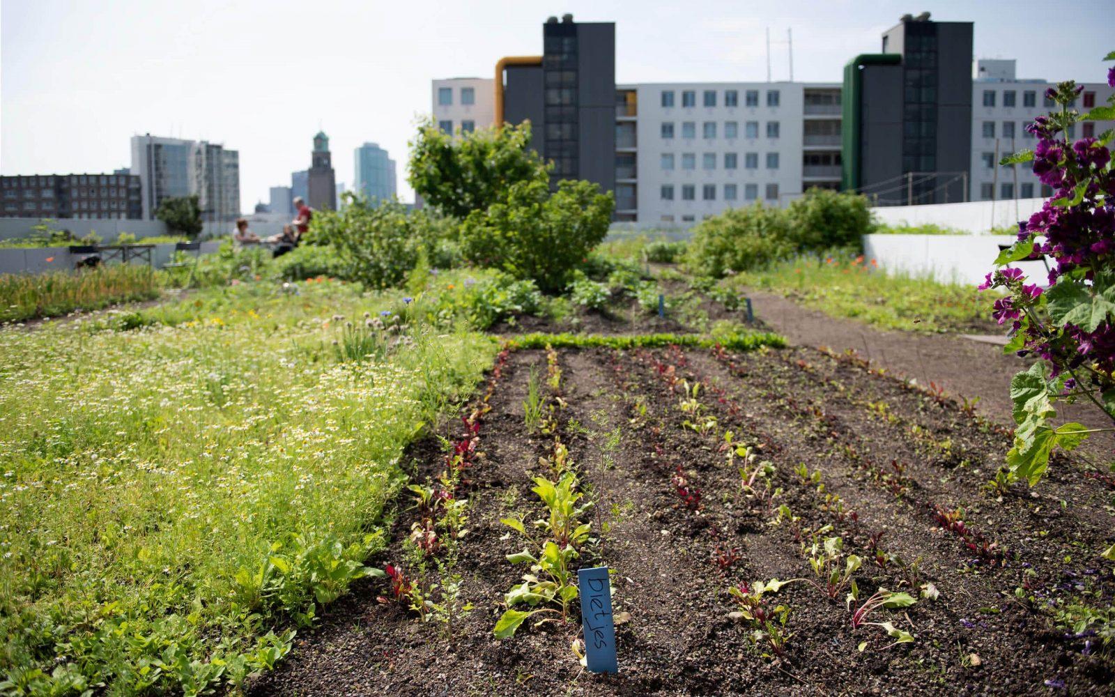 Stadslandbouw 2