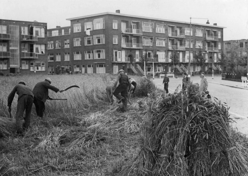 Urban agriculture during the war years